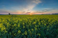 Восход солнца над зацветая полем рапса Стоковое Фото