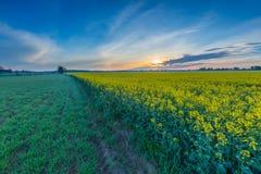 Восход солнца над зацветая полем рапса Стоковая Фотография