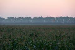 Восход солнца над кукурузным полем Стоковое фото RF