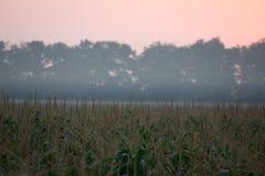Восход солнца над кукурузным полем Стоковые Изображения RF