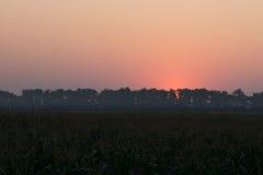 Восход солнца над кукурузным полем Стоковая Фотография RF
