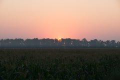 Восход солнца над кукурузным полем Стоковые Фотографии RF