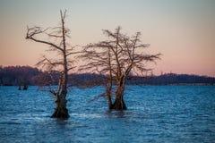 Восход солнца на озере Reelfoot Стоковое фото RF