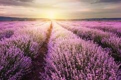 Восход солнца над полем лаванды в Болгарии Стоковые Фотографии RF