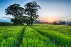 Восход солнца над полями ячменя Стоковое Изображение