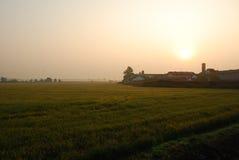 Восход солнца на полях риса Новары, Италия стоковая фотография rf
