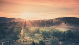 Восход солнца над прованским полем Стоковые Изображения RF