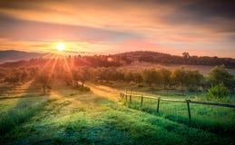Восход солнца над прованским полем Стоковые Фотографии RF
