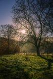 Восход солнца над росой утра Стоковое Изображение RF