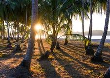 Восход солнца на тропической береговой линии Стоковая Фотография RF