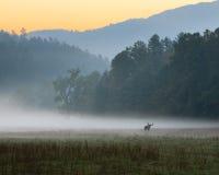 Восход солнца над туманным лугом при мужской лось быка пася Стоковое Фото