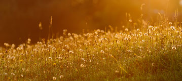 Восход солнца на луге Стоковые Фотографии RF