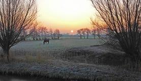 Восход солнца на утре зимы Стоковые Фото
