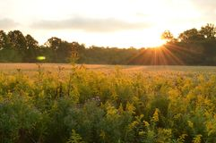 Восход солнца над цветками поля и обочины страны стоковые изображения