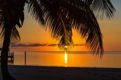 Восход солнца на Key West с пальмой Стоковые Изображения RF
