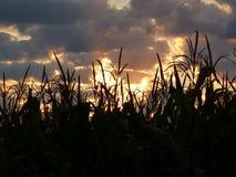 Восход солнца нивы Стоковое фото RF
