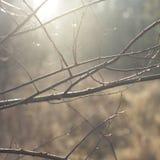 Восход солнца осени Стоковые Изображения RF