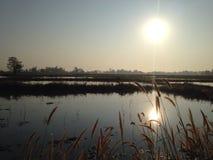 Восход солнца от поля риса Стоковое Изображение RF