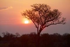 Восход солнца парка Kruger Стоковое Фото