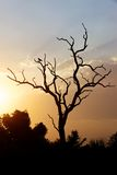Восход солнца парка Kruger Стоковые Фото