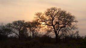 Восход солнца парка Kruger Стоковая Фотография