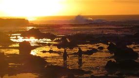 Восход солнца пингвина Стоковые Фотографии RF