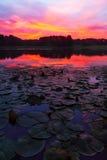 Восход солнца пусковых площадок лилии Стоковое Изображение