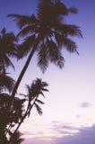 Восход солнца пляжа Alona Стоковые Изображения