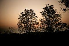 восход солнца раннего утра иллюстрация вектора