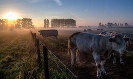 Восход солнца сельской местности Стоковое Фото