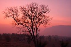 Восход солнца силуэта Стоковое Фото