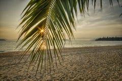 Восход солнца с ладонью кокоса выходит на тропическую предпосылку пляжа Стоковое Фото