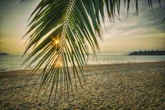Восход солнца с ладонью кокоса выходит на тропическую предпосылку пляжа Стоковое Изображение RF