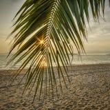 Восход солнца с ладонью кокоса выходит на тропическую предпосылку пляжа Стоковые Изображения RF