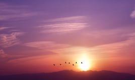 Восход солнца с летящими птицами Стоковые Фото