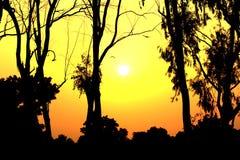 Восход солнца с желтыми сыном и деревьями Стоковая Фотография