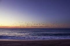 Восход солнца с птицами Стоковая Фотография