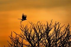 Восход солнца с птицей Стоковая Фотография RF