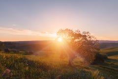 Восход солнца с сиротливым деревом Стоковая Фотография RF