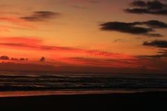 Восход солнца с чайками Стоковая Фотография RF