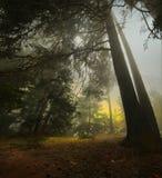 Восход солнца тайны Стоковые Изображения