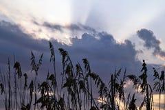 Восход солнца травы дюны Стоковые Изображения