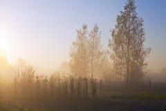 восход солнца тумана Стоковые Фото
