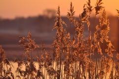 Восход солнца утро солнечное Лучи ` s солнца на зоре заводы Стоковые Изображения