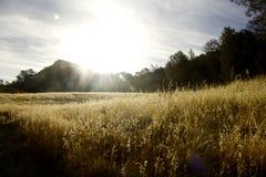 Восход солнца холма зерна стоковое фото