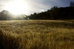 Восход солнца холма зерна Стоковые Изображения