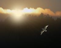 Восход солнца чайки Стоковое Изображение RF