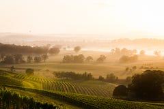 Восход солнца через виноградник Стоковые Фотографии RF