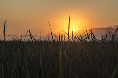 Восход солнца через траву болота Стоковое Изображение RF