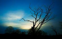 Восход солнца стоковые изображения